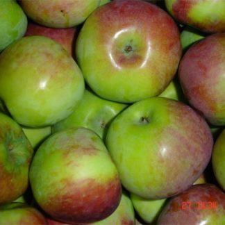 Viljapuud ja marjapõõsad, Õunapuu, Delikatess