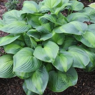 Lilled, Hosta, Avocado